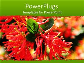 Slide deck having a beautiful view of the scarlet flower along with leaves