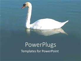 Elegant PPT layouts enhanced with a beautiful white colored swan on a calm lake