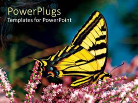 PPT layouts featuring beautiful yellow and black butterfly perching on a flower