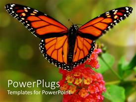 Elegant presentation design enhanced with beautiful yellow butterfly close up on red lantana flower