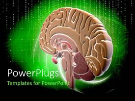 Presentation theme having binary digits on green and black background withcolorful human brain