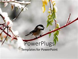 PPT theme featuring a bird on the branch of a tree in winters