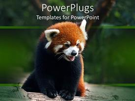 PPT theme with black and brown furred panda panting