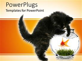 Elegant PPT theme enhanced with black kitten trying to reach scared goldfish in bowl