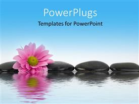 Slide deck having black stones and pink flower with water