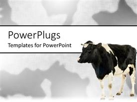 Colorful PPT theme having black and white cow on matching black and white background