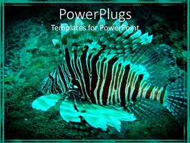 Presentation theme consisting of black and white lion fish swimming