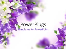 Beautiful PPT theme with blue campanulas and white lily with white color