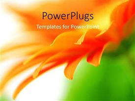 Elegant PPT theme enhanced with blurred orange vivid flower petals with nature