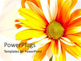 PPT layouts featuring bright orange sunflower over white background