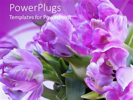 Elegant PPT theme enhanced with bright purple colored flowers in its natural green habitat