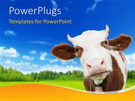 Elegant slide deck enhanced with brown and white cow with bell on background of grass, trees, sky