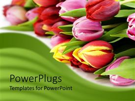 Elegant PPT layouts enhanced with bunch of tulips laying on white background