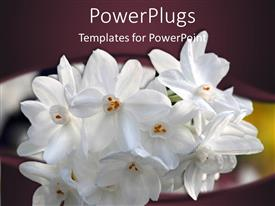 Audience pleasing slide deck featuring bundle of white flowers peaking through dark purple background
