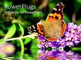 Beautiful presentation with a butterfly on the flower with blurred background