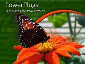Presentation design with a butterfly on the flower with greenery in the background