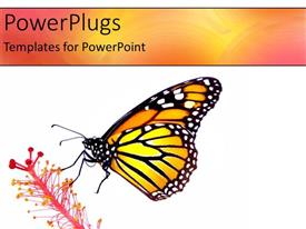 Colorful PPT theme having a butterfly with a flower and white background