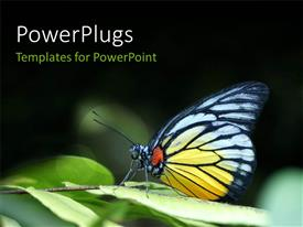 Audience pleasing slides featuring a butterfly with a lot of greenery in the background