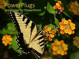 PPT layouts having a butterfly with a number of flowers
