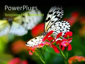 Slide deck enhanced with a butterfly with a number of flowers and blurr background