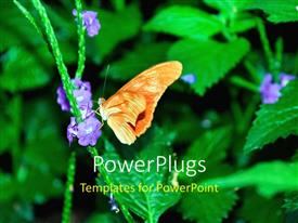 Theme having butterfly perches on purple flower of green plant on black background