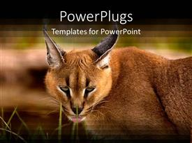 5000 zoo zoo powerpoint templates w zoo zoo themed backgrounds beautiful ppt layouts with a caracal cat with greenery in the background toneelgroepblik Image collections