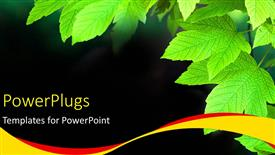 PPT theme featuring a bunch of green leaves on a black colored background