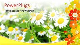 Colorful presentation having bright sun rays shining on beautiful flower field