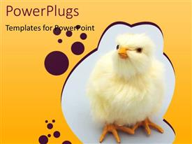 PPT layouts consisting of chick Theme