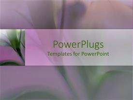 Presentation design having close-up of beautiful green lily flower with long stems