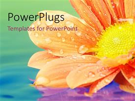 PPT theme consisting of a beautiful flower in a lake