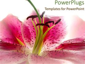 PPT theme having close-up of pink flower on colorful background