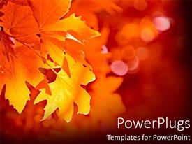 Beautiful presentation design with close-up yellow leaf during fall