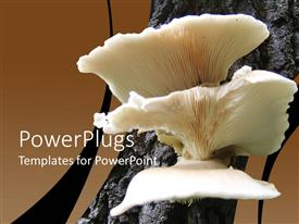 PPT theme having a Close Look of Mushroom