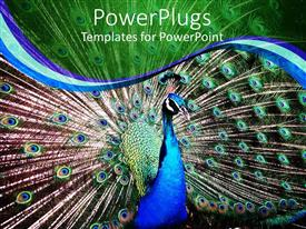 Elegant PPT theme enhanced with close up of blue peacock with wings spread out
