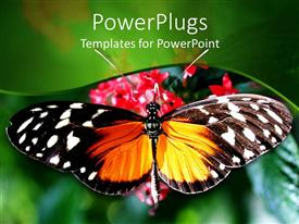 Beautiful PPT layouts with close up of butterfly with wide open wings on rose flowers and blurred green background