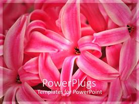 Elegant presentation theme enhanced with close up of flowers with blurred background