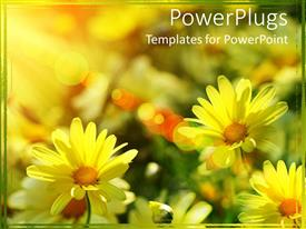 Beautiful presentation design with close up of multiple yellow daisies under sunlight rays
