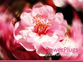 Colorful presentation having close up of pink cherry blossoms flowers with blurry background