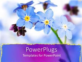 PPT theme having close up of purple forget me not flowers, purple streak border
