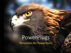 PPT layouts enhanced with close up shot of a golden eagle on a blurry background