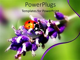 Colorful PPT theme having close up shot of a lady bird on a lavender branch