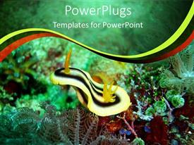 Presentation design enhanced with close up shot of the of plants inside a sea