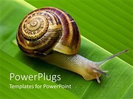 Presentation theme enhanced with close up of snail going on a green leaf