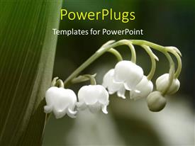 Audience pleasing PPT theme featuring a close up view of a branch of a plant with five white flowers