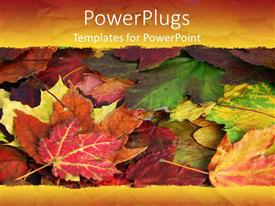Elegant presentation theme enhanced with a close up view of lots of colourful leaves