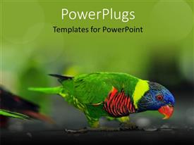Slide deck enhanced with a close up view of a multi colored bird on a tree branch