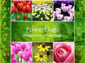 Theme featuring collage of colorful flowers red pink white yellow tulips, pink rose, yellow flowers, green trees