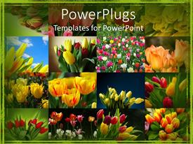 PPT theme with collage of colorful tulips, green border