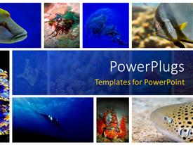 Beautiful presentation theme with a number of figures related to sea life in the picture